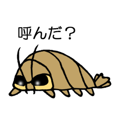 オオグソクムシ