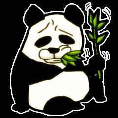 笹が主食の肉食獣パンダさん(セリフ無し)