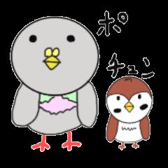 鳩と雀基本鳥だらけ