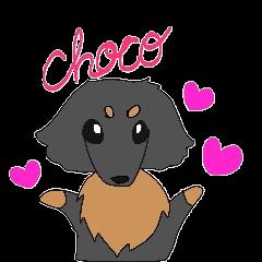 うちの犬、チョコ