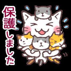 [LINEスタンプ] 猫だすけ (1)