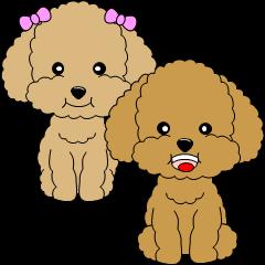 かわいいトイプードル犬