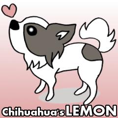 チワワのレモンちゃん♪