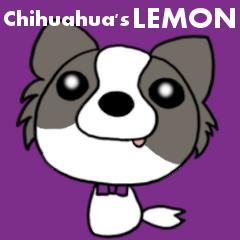 チワワのレモンちゃん②