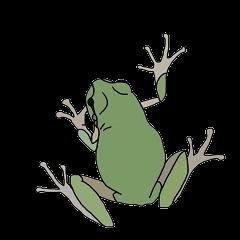 カエル!かえる!蛙!