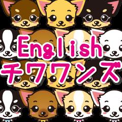English(英語)チワワンズ