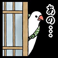 ふろしき文鳥