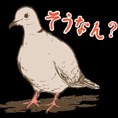 埼玉のシラコバト